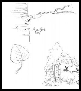 #2 Aspen leaf branch deer with border